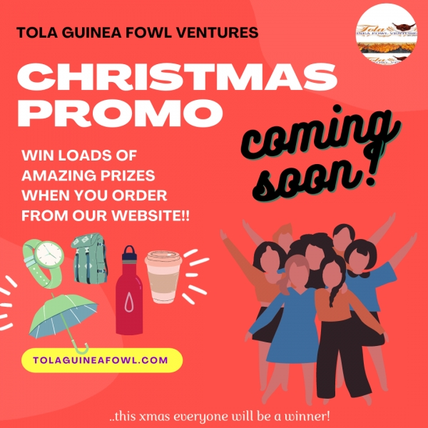 Tola Guinea Fowl Ventures Plans Massive Promo This Xmas Season